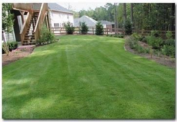 Jual Rumput Golf Murah Harga 27rb/m2 Dengan Tanam | Padang Rumput Golf