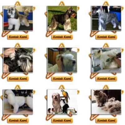... Spesialis Salon Perawatan Khusus Hewan Peliharaan Anjing Dan Kucing